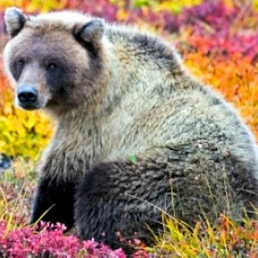 Grizzly-Yukon-Hiking_1.jpg