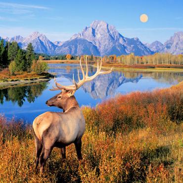 WY Grand Teton Stag.jpg