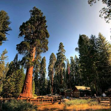 Sequoia National Park 2 (2).jpg