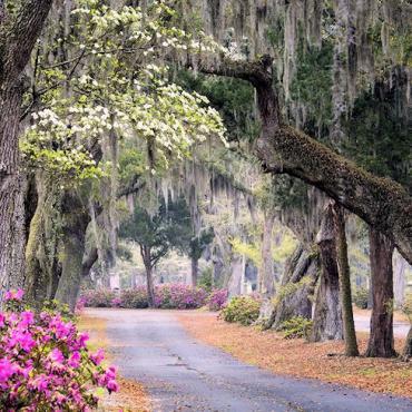 GA Pretty road.jpg