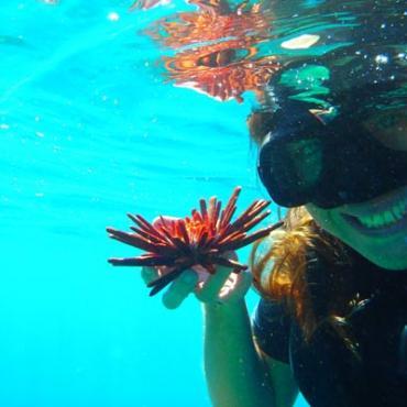 HI snorkelling.jpg