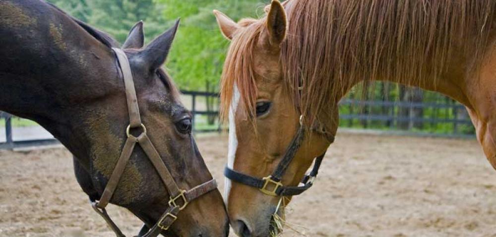 KY Horses heads.jpg