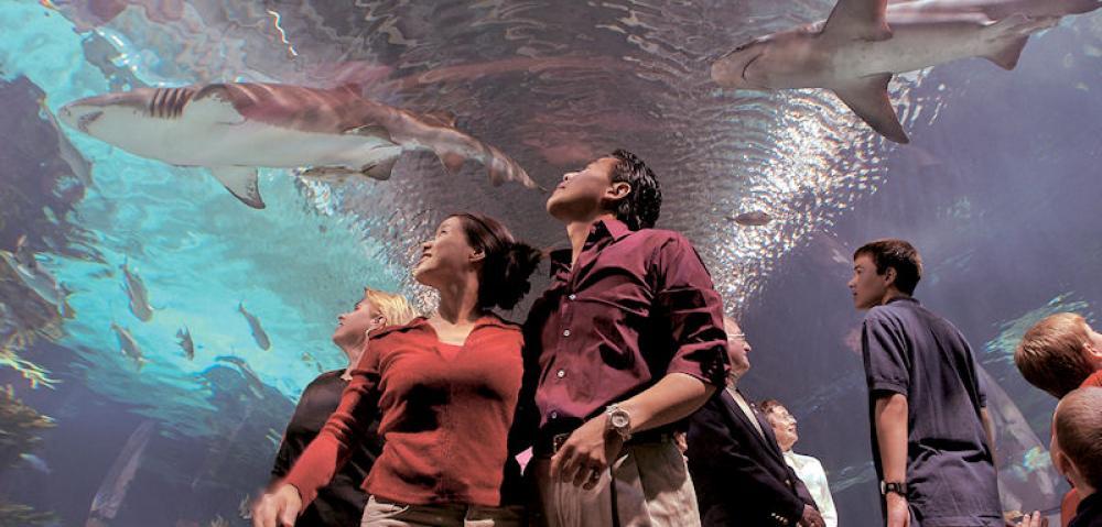 Newport-Aquarium-10_HR.jpg