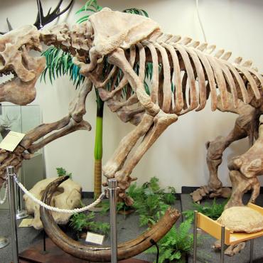 UT Blanding Dino Museum.jpg