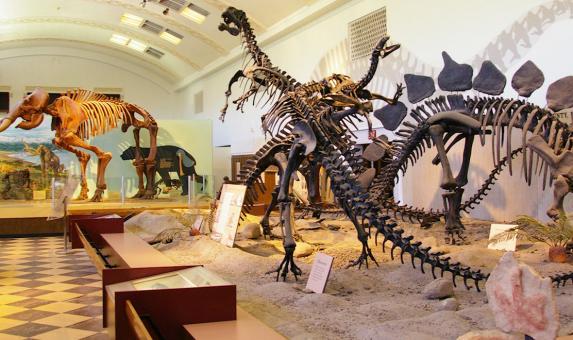 UT Dinosaur Banner.jpg