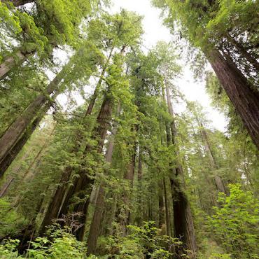 CA Redwoods Natl Park.jpg