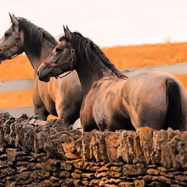 KY Shaker Village horses.jpg
