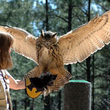 Bearizona bird of prey.jpg