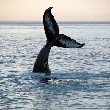 CA WhaleTail_DexterFarm.jpg