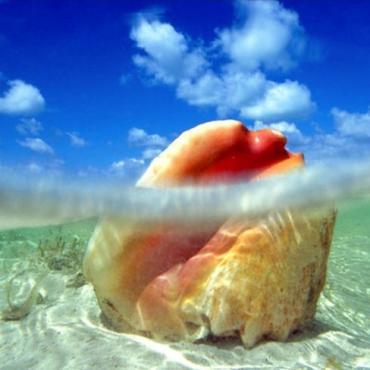 BAH shell.jpg