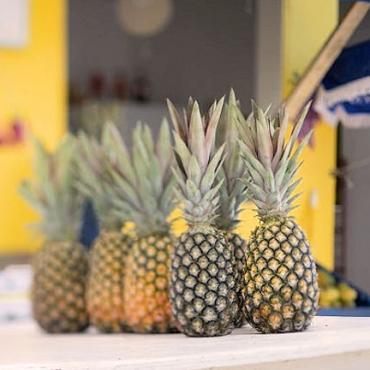 pineapple-fest[1].jpg