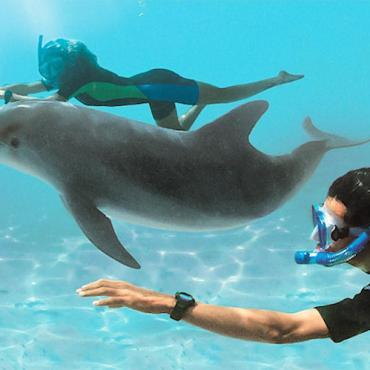 BAH Dolphin Cay deep swim.jpg