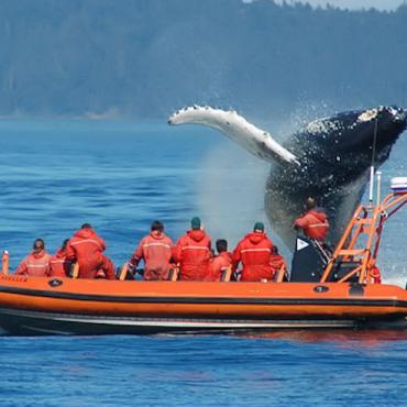 BC zodiac-whale-watching[1].jpg