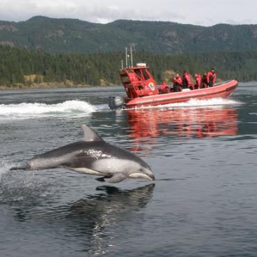 BC Campbell river dolphin.jpg