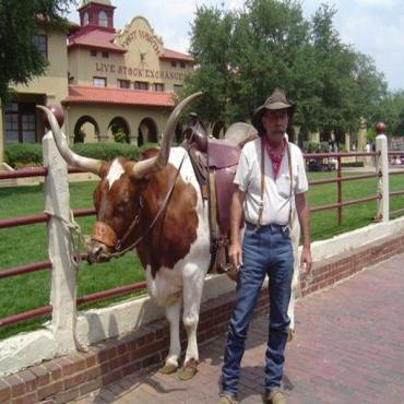 FOrt Worth Cowboy and bull