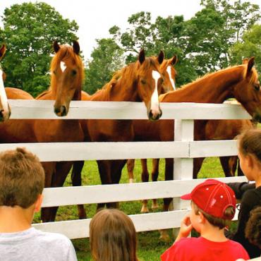 KY horses with kids