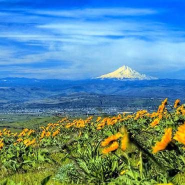 Mount Hood view