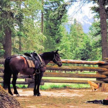 BC Horse ranch