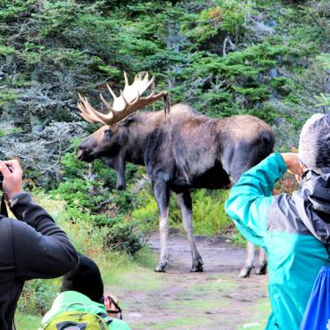 NS Moose on Skyline credit_MirandaDoddTourism Nova Scotia
