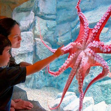 MRY Aquarium