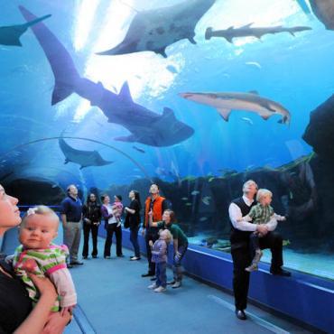 ATL-Georgia-Aquarium