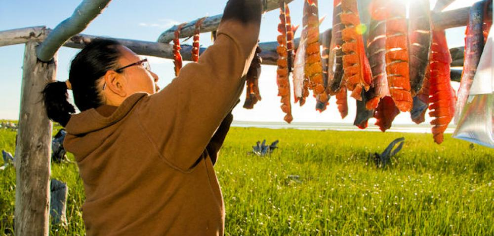 AK Nome salmon drying  © State of Alaska  Michael DeYoung