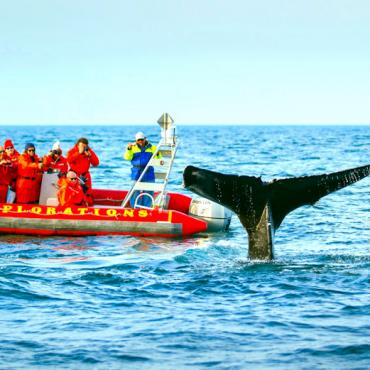 NS Bay of fundy Whale watching  Credit Tourism Nova Scotia