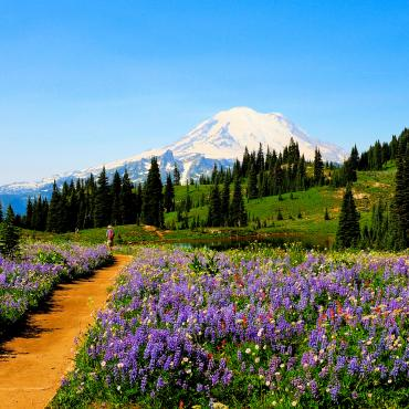 Seattle_wa_port_of_Mount_Rainier_Wildflowers_Courtesy_Deby_Dixon