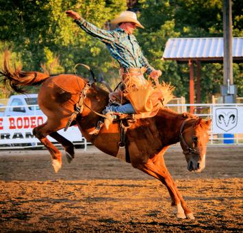 SD Rodeo
