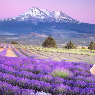 CA Mt Shasta web