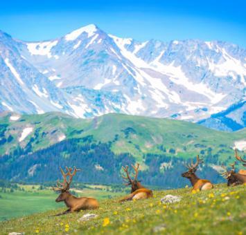 CO Elk & Rocky Mountains