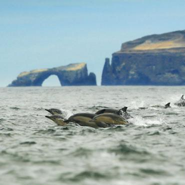 Dolphin Pod at Anacapa_Island Packers_Steve Munch 10MB