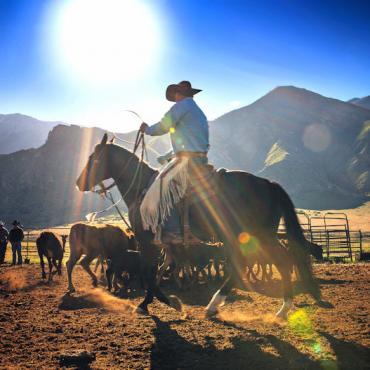 TX Cowboy