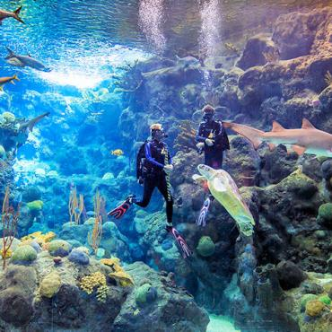 FL Aquarium Dive Show at Panoramic Coral Reef Viewing Window