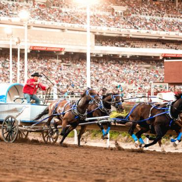 Calgary Stampede Chuckwagon Racing