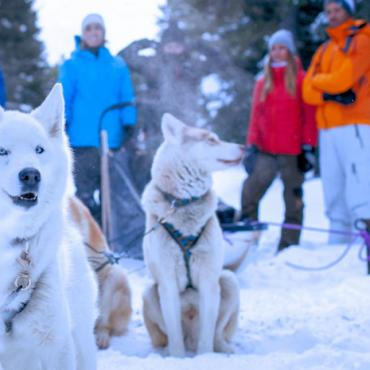 Dog_Sledding_Great_Photo  Credit _Noel_Hendrickson
