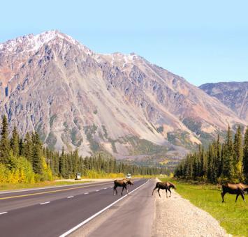 AK Road near denali
