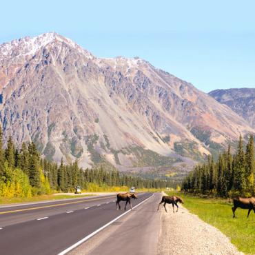 AK Road near denali