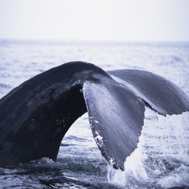 whale tail CA