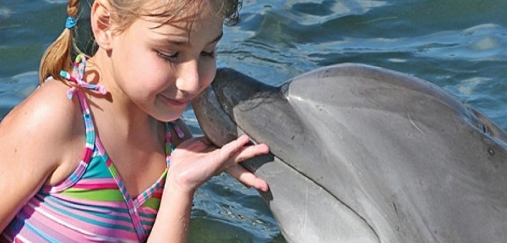Dolphin Marathon Key