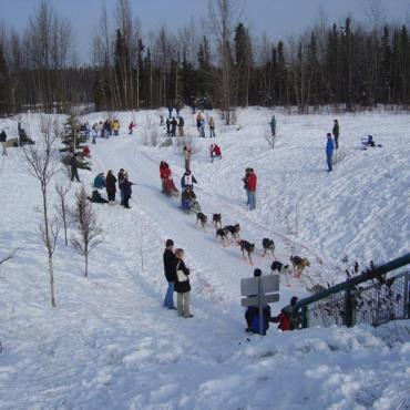 Iditarod Anchorage AK