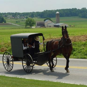AMish pony and trap Penn