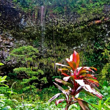 Wailua River fern Grotto