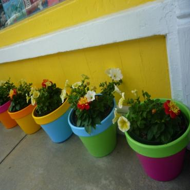 colourful flower pots