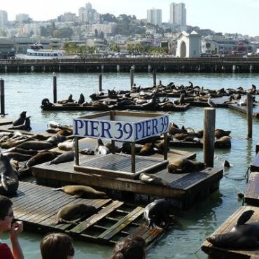 San Fran sea lions Pier 39