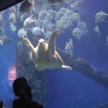 Virginia beach sea turtle