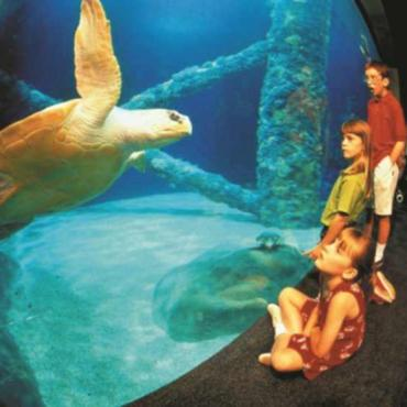 VA_Aquarium_Sea_Turtle_credit_Virginia_Beach_Tourism1