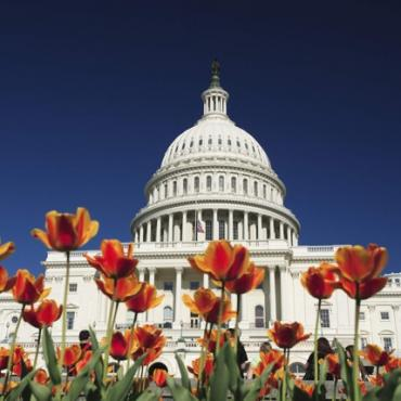 WAS DC Capitol building tulips