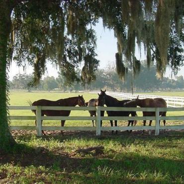 Fl Ocala horse farm