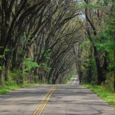 Fl Tallahassee Canopy Road